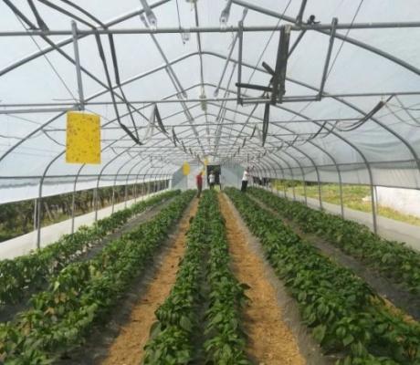 DOBOJ: Proizvođači paprika s njiva stigli na predavanje